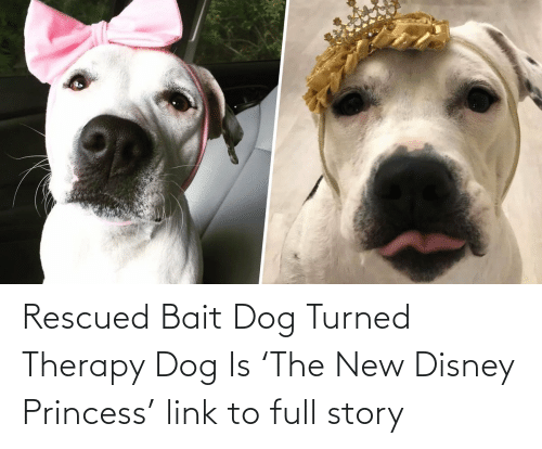 Disney, Tumblr, and Link:   Rescued Bait Dog Turned Therapy Dog Is 'The New Disney Princess'  link to full story