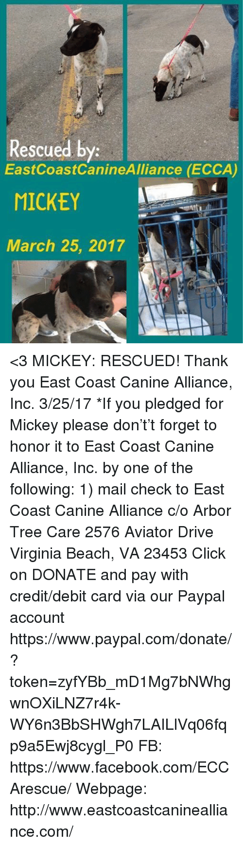 Memes And Virginia Beach Rescued By Eastcoast Caninealliance Ecca Mickey