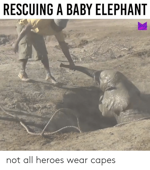 Memes, Elephant, and Heroes: RESCUING A BABY ELEPHANT not all heroes wear capes