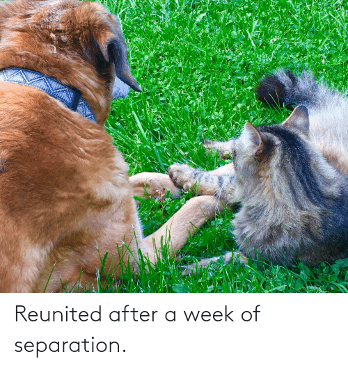 Week,  Separation, and Reunited: Reunited after a week of separation.