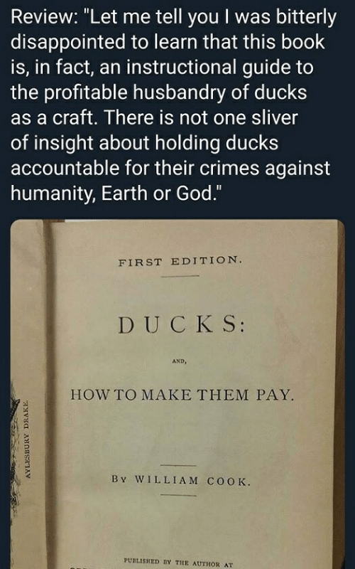 """Disappointed, God, and Book: Review: """"Let me tell you I was bitterly  disappointed to learn that this book  is, in fact, an instructional guide to  the profitable husbandry of ducks  as a craft. There is not one sliver  of insight about holding ducks  accountable for their crimes against  humanity, Earth or God.""""  FIRST EDITION  DUCK S:  AND,  HOW TO MAKE THEM PAY.  B v WILLIAM COOK.  PUBLISHED BY THE AUTHOR AT"""