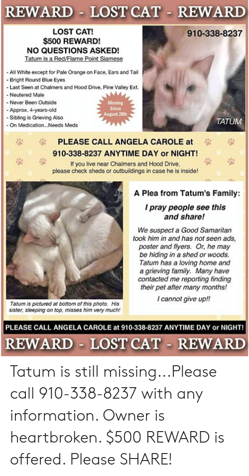 Family, Memes, and Lost: REWARD LOST CAT REWARD  LOST CAT!  $500 REWARD!  NO QUESTIONS ASKED!  Tatum is a Red/Flame Point Siamese  - All White except for Pale Orange on Face, Ears and Tail  910-338-8237  Bright Round Blue Eyes  -Last Seen at Chalmers and Hood Drive, Pine Valley Ext  - Neutered Male  - Never Been Outside  Missing  Since  August 28th  Approx. 4-years-old  -Sibling is Grieving Also  - On Medication...Needs Meds  TATUM  PLEASE CALL ANGELA CAROLE at  910-338-8237 ANYTIME DAY or NIGHT!  If you live near Chalmers and Hood Drive,  please check sheds or outbuildings in case he is inside!  A Plea from Tatum's Family:  I pray people see this  and share!  We suspect a Good Samaritan  took him in and has not seen ads,  poster and flyers. Or, he may  be hiding in a shed or woods.  Tatum has a loving home and  a grieving family. Many have  contacted me reporting finding  their pet after many months!  I cannot give up!!  Tatum is pictured at bottom of this photo. His  sister, sleeping on top, misses him very much!  PLEASE CALL ANGELA CAROLE at 910-338-8237 ANYTIME DAY or NIGHT!  REWARD LOST CAT REWARD Tatum is still missing...Please call 910-338-8237 with any information.  Owner is heartbroken.  $500 REWARD is offered.  Please SHARE!