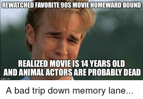 rewatched favorite 90s movie homeward bound realized movie is 14 27212822 ✅ 25 best memes about bad trip bad trip memes,Bad Trip Meme