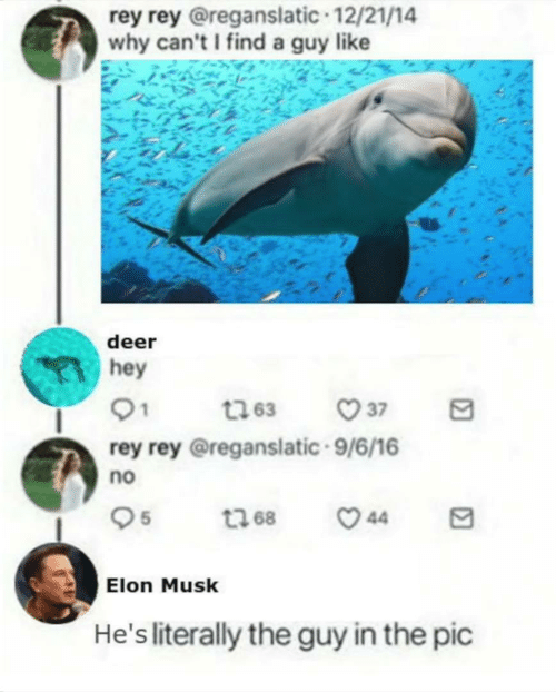 Deer, Rey, and Elon Musk: rey rey @reganslatic 12/21/14  why can'tI find a guy like  deer  hey  rey rey @reganslatic.9/6/16  no  Elon Musk  He's literally the guy in the pic