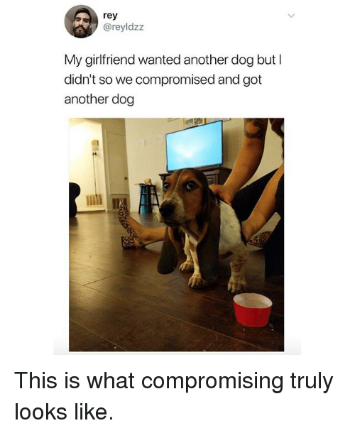 Memes, Rey, and Girlfriend: rey  @reyldzz  My girlfriend wanted another dog but l  didn't so we compromised and got  another dog This is what compromising truly looks like.