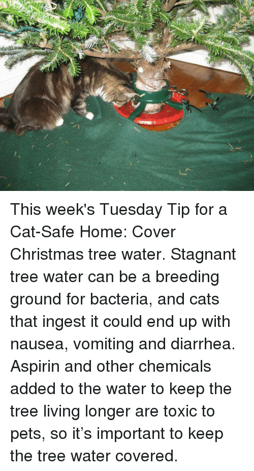 Ria This Week's Tuesday Tip for a Cat-Safe Home Cover Christmas ...