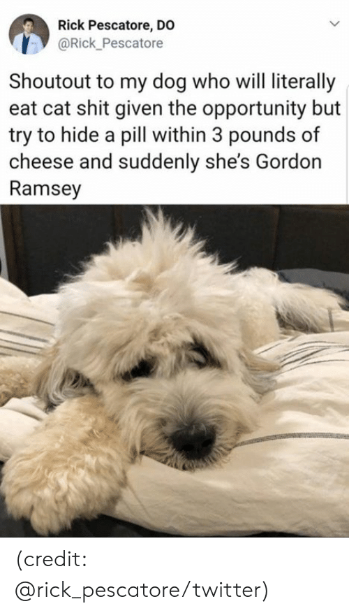 Dank, Shit, and Twitter: Rick Pescatore, DO  @Rick_Pescatore  Shoutout to my dog who will literally  eat cat shit given the opportunity but  try to hide a pill within 3 pounds of  cheese and suddenly she's Gordon  Ramsey (credit: @rick_pescatore/twitter)