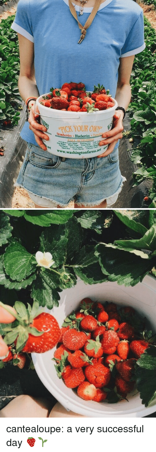 Tumblr, Blog, and Http: RICK YOUR OWN  Strawberries Blueberries  h Acre Corn Mare Pesting  odes Field T  kaces Corn  Pumplce  Trkyck  washingtonfarms.n cantealoupe: a very successful day 🍓🌱