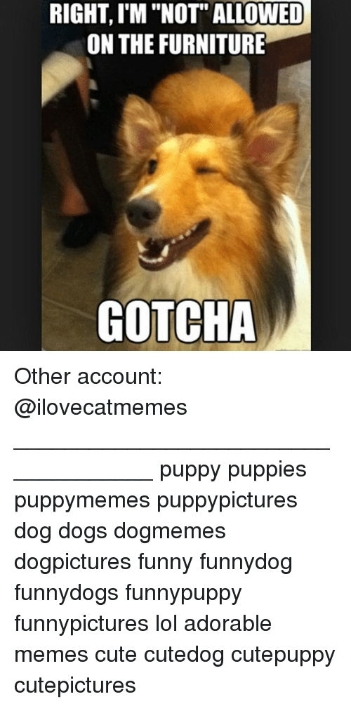 Furniture Gotcha Other Account Puppy