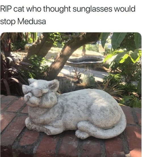 Sunglasses, Thought, and Cat: RIP cat who thought sunglasses would  stop Medusa