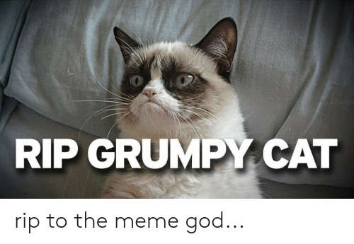 Funny, God, and Meme: RIP GRUMPY CAT rip to the meme god...