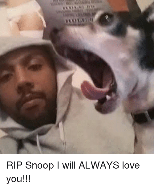 rip snoop i will always love you 26706501 ✅ 25 best memes about always love you always love you memes,I Will Always Love You Meme