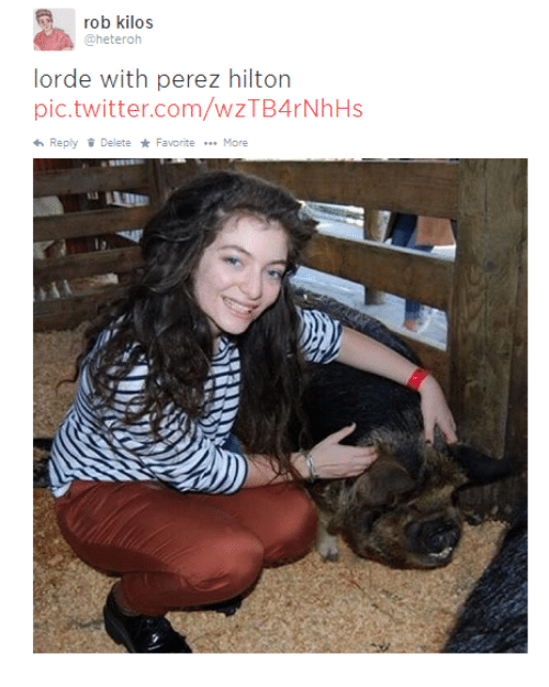 25+ Best Memes About Lorde