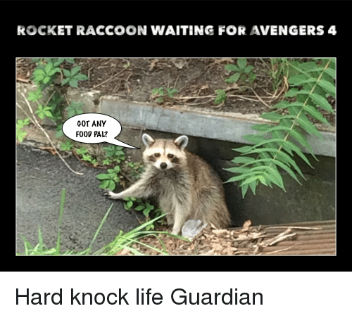 ROCKET RACCOON WAITING FOR AVENGERS 4 GOT ANY FOOD PAL