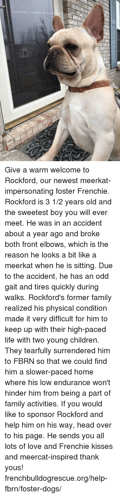 Memes, Meerkat, and 🤖: ROCKFORD // FRENCHBULLD RESSUER Give a warm welcome to Rockford, our newest meerkat-impersonating foster Frenchie. Rockford is 3 1/2 years old and the sweetest boy you will ever meet. He was in an accident about a year ago and broke both front elbows, which is the reason he looks a bit like a meerkat when he is sitting. Due to the accident, he has an odd gait and tires quickly during walks. Rockford's former family realized his physical condition made it very difficult for him to keep up with their high-paced life with two young children. They tearfully surrendered him to FBRN so that we could find him a slower-paced home where his low endurance won't hinder him from being a part of family activities.  If you would like to sponsor Rockford and help him on his way, head over to his page. He sends you all lots of love and Frenchie kisses and meercat-inspired thank yous! frenchbulldogrescue.org/help-fbrn/foster-dogs/