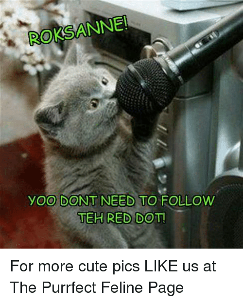 Memes, 🤖, and Red: ROKSANNE  yoo DONT NEED TO FOLLOW  TEH RED DOT! For more cute pics LIKE us at The Purrfect Feline Page