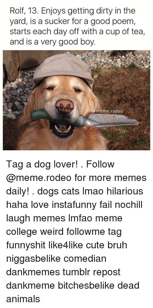 rolf 13 enjoys getting dirty in the yard is a 13096050 25 best dog on computer memes good boy meme memes