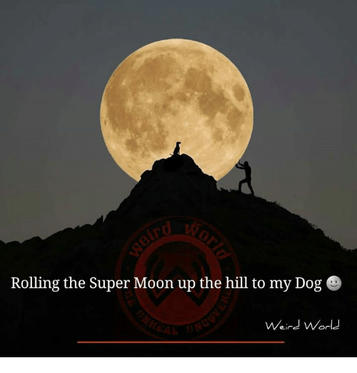 rolling the super moon up the hill to my dog 6818569 funny moon memes of 2017 on me me 9gag,Tortilla Moon Meme