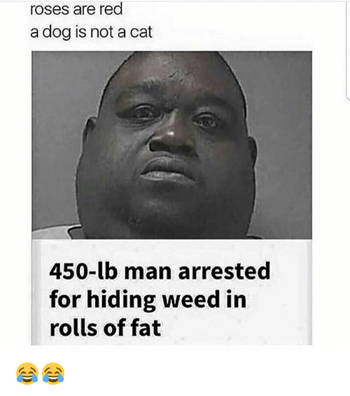 Memes, Weed, and Fat: roses are rea  a dog is not a cat  450-lb man arrested  for hiding weed in  rolls of fat 😂😂