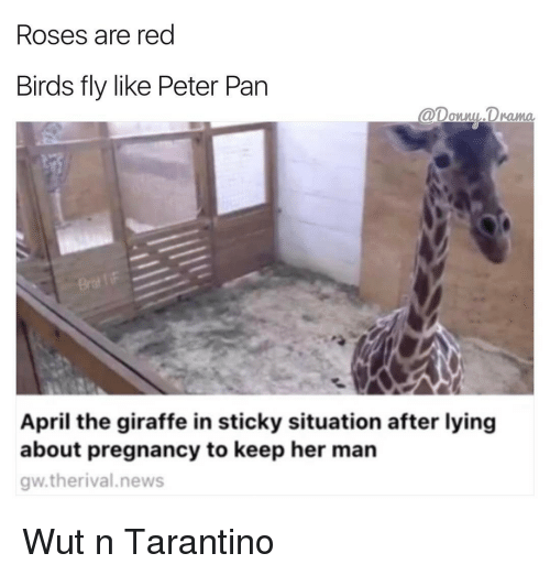 Memes, 🤖, and Drama: Roses are red  Birds fly like Peter Pan  Drama.  April the giraffe in sticky situation after lying  about pregnancy to keep her man  gw.therival news Wut n Tarantino