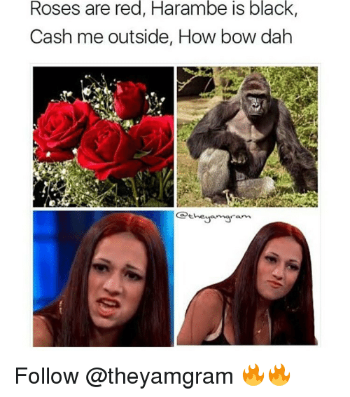Memes, 🤖, and Bow: Roses are red, Harambe is black,  Cash me outside, How bow dah  heya maram Follow @theyamgram 🔥🔥