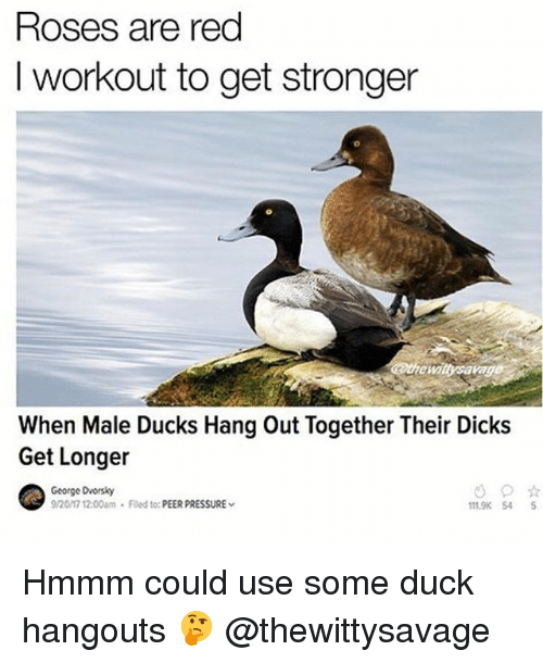 Dicks, Gym, and Pressure: Roses are red  I workout to get stronger  the wiitysavag  When Male Ducks Hang Out Together Their Dicks  Get Longer  George Dvorsky  9/2017 12:00am Fled to:PEER PRESSURE  11.9K 54S Hmmm could use some duck hangouts 🤔 @thewittysavage
