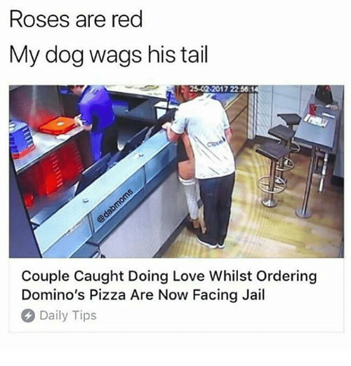 Jail, Love, and Memes: Roses are red  My dog wags his tail  25-02-2017 22 56  Couple Caught Doing Love Whilst Ordering  Domino's Pizza Are Now Facing Jail  Daily Tips