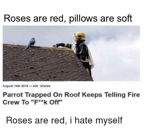 """Fire, Red, and Parrot: Roses are red, pillows are soft  August 14th 2018-43K Shares  Parrot Trapped On Roof Keeps Telling Fire  Crew To """"F**k Off"""" Roses are red, i hate myself"""
