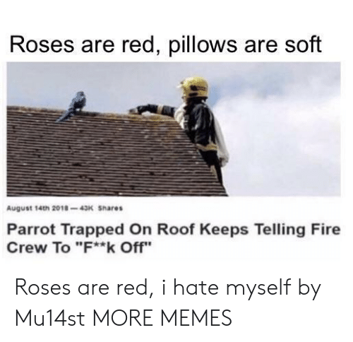 """Dank, Fire, and Memes: Roses are red, pillows are soft  August 14th 2018-43K Shares  Parrot Trapped On Roof Keeps Telling Fire  Crew To """"F**k Off"""" Roses are red, i hate myself by Mu14st MORE MEMES"""