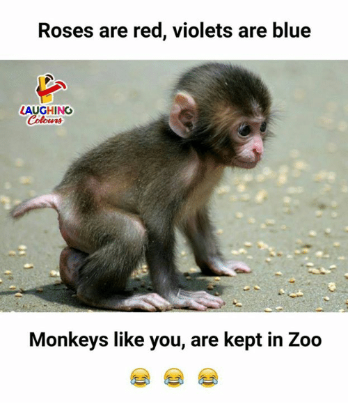 Blue, Indianpeoplefacebook, and Zoo: Roses are red, violets are blue  LAUGHING  Colowrs  Monkeys like you, are kept in Zoo