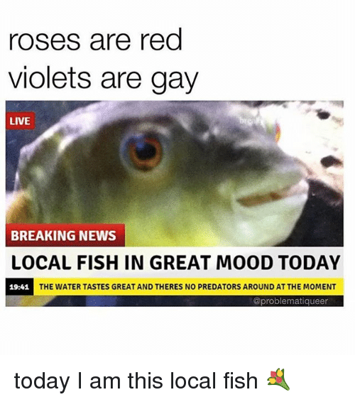 Fish Are Gay