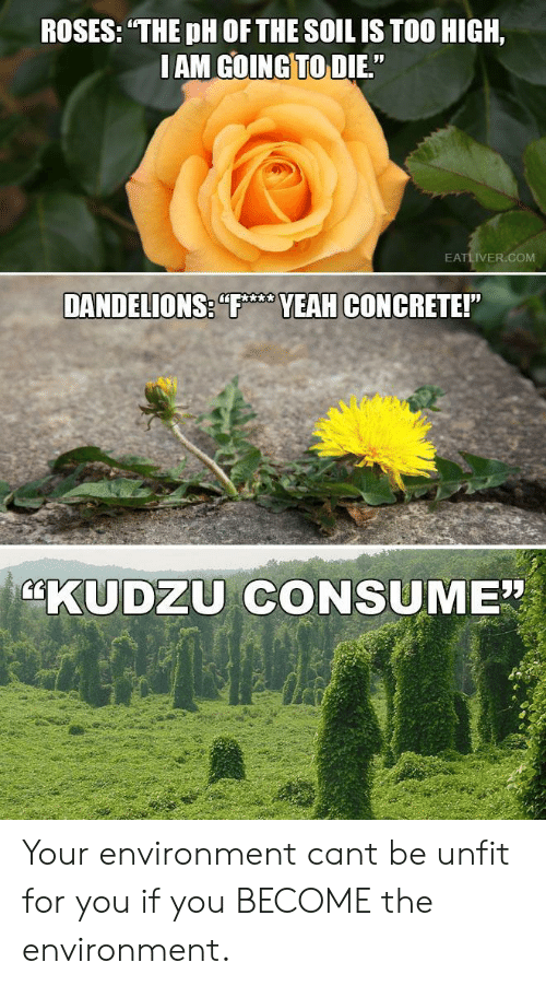 """Too High, Com, and Concrete: ROSES: THE pH OF THE SOIL IS TOO HIGH,  IAM GOINGTO DIE.""""  EATLIVER.COM  VEAH CONCRETE!  KUDZU CONSUME"""" Your environment cant be unfit for you if you BECOME the environment."""