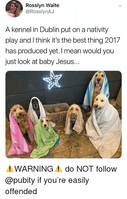 Funny, Jesus, and Meme: Rosslyn Waite  @RosslynAJ  A kennel in Dublin put on a nativity  play and I think it's the best thing 2017  has produced yet. I mean would you  just look at baby Jesus.  .. ⚠️WARNING⚠️ do NOT follow @pubity if you're easily offended
