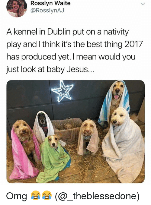 Jesus, Memes, and Omg: Rosslyn Waite  @RosslynAJ  A kennel in Dublin put on a nativity  play and I think it's the best thing 2017  has produced yet. I mean  just look at baby Jesus.  would you Omg 😂😂 (@_theblessedone)