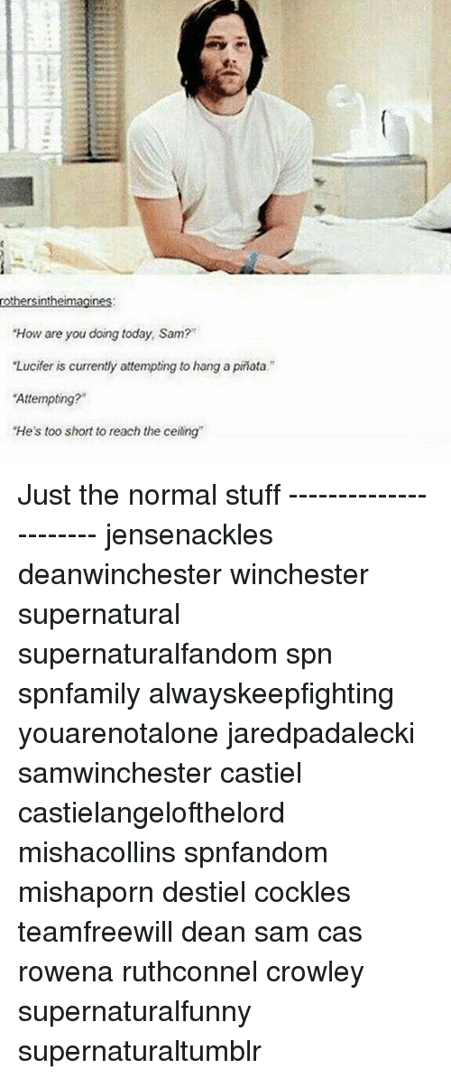 """Memes, Pinata, and Lucifer: rothersintheimagines:  """"How are you doing today, Sam?  """"Lucifer is currently attempting to hang a pinata.""""  Attempting?  """"He's too short to reach the ceiling Just the normal stuff ---------------------- jensenackles deanwinchester winchester supernatural supernaturalfandom spn spnfamily alwayskeepfighting youarenotalone jaredpadalecki samwinchester castiel castielangelofthelord mishacollins spnfandom mishaporn destiel cockles teamfreewill dean sam cas rowena ruthconnel crowley supernaturalfunny supernaturaltumblr"""