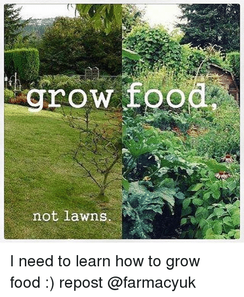 Food Memes And How To Row Not Lawns I Need Learn