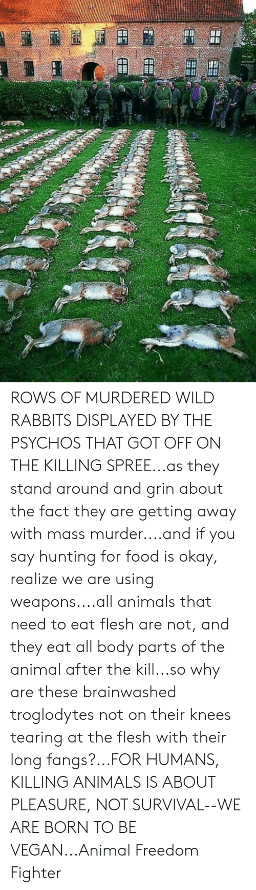 Animals, Food, and Memes: ROWS OF MURDERED WILD RABBITS DISPLAYED BY THE PSYCHOS THAT GOT OFF ON THE KILLING SPREE...as they stand around and grin about the fact they are getting away with mass murder....and if you say hunting for food is okay, realize we are using weapons....all animals that need to eat flesh are not, and they eat all body parts of the animal after the kill...so why are these brainwashed troglodytes not on their knees tearing at the flesh with their long fangs?...FOR HUMANS, KILLING ANIMALS IS ABOUT PLEASURE, NOT SURVIVAL--WE ARE BORN TO BE VEGAN...Animal Freedom Fighter