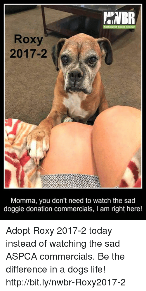 roxy 2017 2 momma you don t need to watch the sad doggie donation