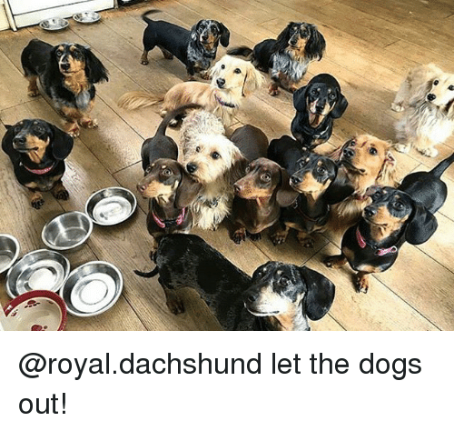 Dogs, Memes, and 🤖: @royal.dachshund let the dogs out!