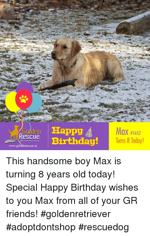 Birthday Friends And Memes Rs Rescue Ppy OX 1652 Turns This Handsome Boy Max Is Turning 8 Years Old