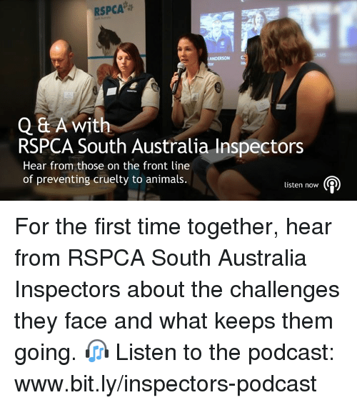 Animals, Memes, and Australia: RSPCA  Q & A with  RSPCA South Australia Inspectors  Hear from those on the front line  of preventing cruelty to animals.  listen now (2) For the first time together, hear from RSPCA South Australia Inspectors about the challenges they face and what keeps them going. 🎧 Listen to the podcast: www.bit.ly/inspectors-podcast