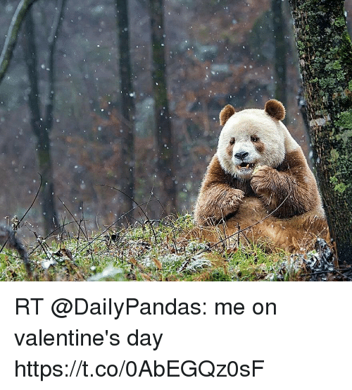 Valentine's Day, Day, and Valentines: RT @DaiIyPandas: me on valentine's day  https://t.co/0AbEGQz0sF