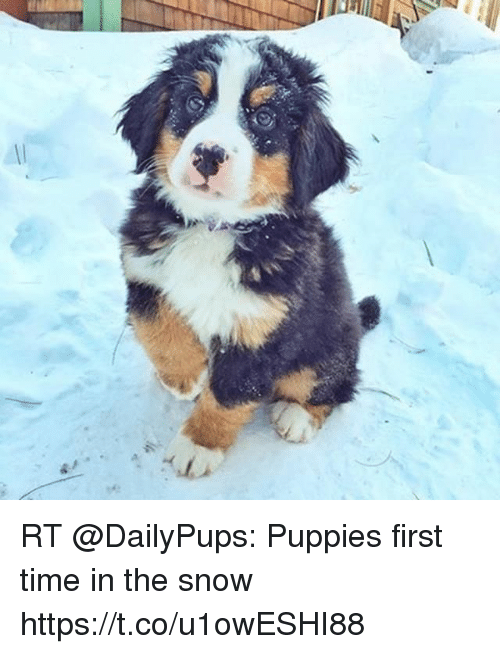 RT Puppies First Time in the Snow Httpstcou1owESHI88 | Meme on ME ME