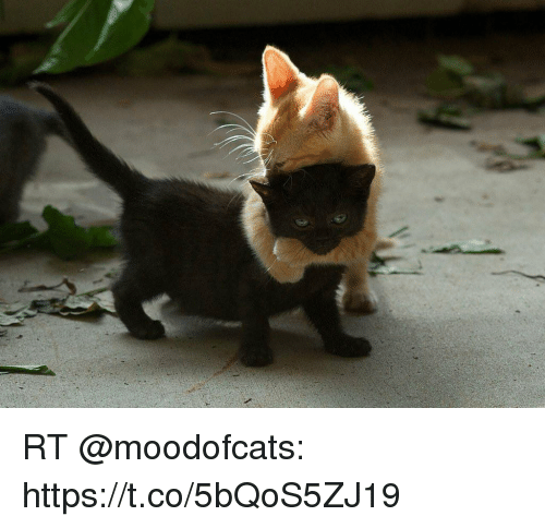 Funny and Https: RT @moodofcats: https://t.co/5bQoS5ZJ19
