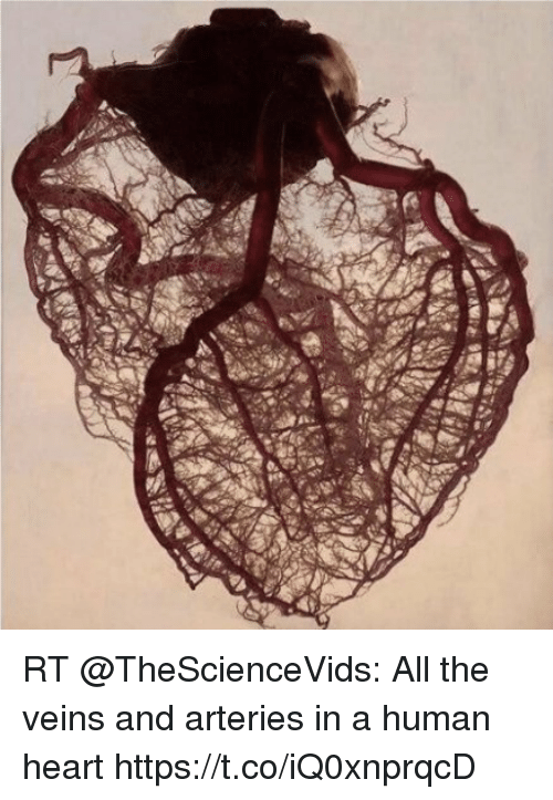 RT All the Veins and Arteries in a Human Heart httpstcoiQ0xnprqcD ...
