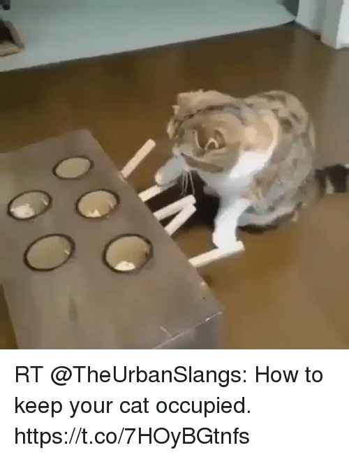 Home Market Barrel Room Trophy Room ◀ Share Related ▶ memes How To 🤖 how cat Your The Games Trick And stillness last one casinos next RT @TheUrbanSlangs: How to keep your cat occupied. https://t.co/7HOyBGtnfs collect meme → Embed it next → RT @TheUrbanSlangs How to keep your cat occupied httpstco7HOyBGtnfs Meme memes How To 🤖 how cat Your memes memes How To How To 🤖 🤖 how how cat cat Your Your found ON 2017-09-22 19:59:53 BY me.me source: twitter view more on me.me
