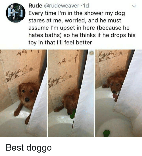 Rude, Shower, and Best: Rude @rudeweaver 1d  Every time I'm in the shower my dog  stares at me, worried, and he must  assume l'm upset in here (because he  hates baths) so he thinks if he drops his  toy in that I'll feel better Best doggo