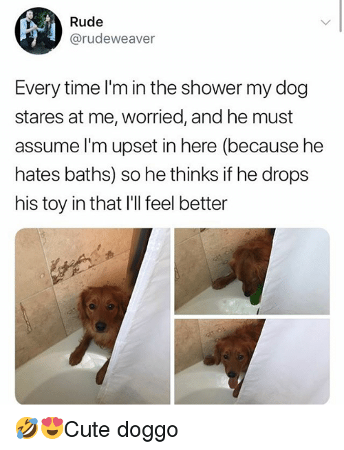 Memes, Rude, and Shower: Rude  @rudeweaver  Every time l'm in the shower my dog  stares at me, worried, and he must  assume l'm upset in here (because he  hates baths) so he thinks if he drops  his toy in that I'Il feel better 🤣😍Cute doggo