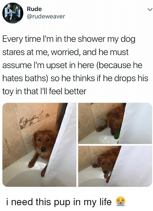 Life, Rude, and Shower: Rude  @rudeweaver  Every time l'm in the shower my dog  stares at me, worried, and he must  assume I'm upset in here (because he  hates baths) so he thinks if he drops his  toy in that I'll feel better i need this pup in my life 😭