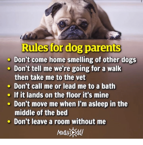 Rules For Dog Parents Don't Come Home Smelling Of Other